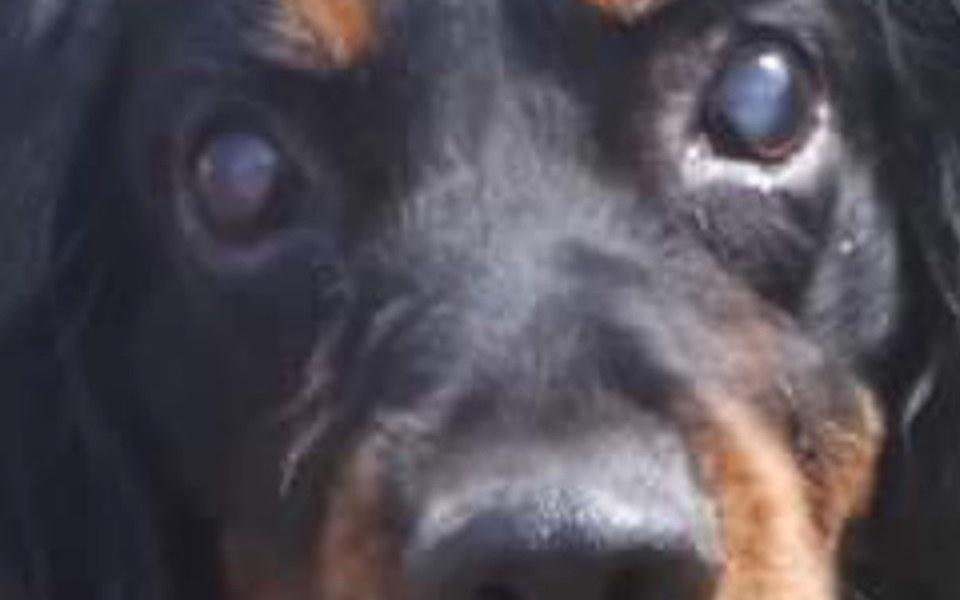 Zbiórka Niewidomy pies potrzebuje pomocy - zdjęcie główne
