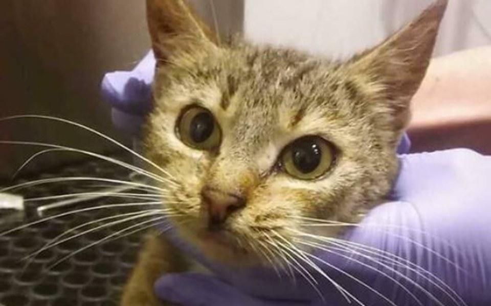 Zbiórka Neska-kotka, która miała nie żyć - zdjęcie główne