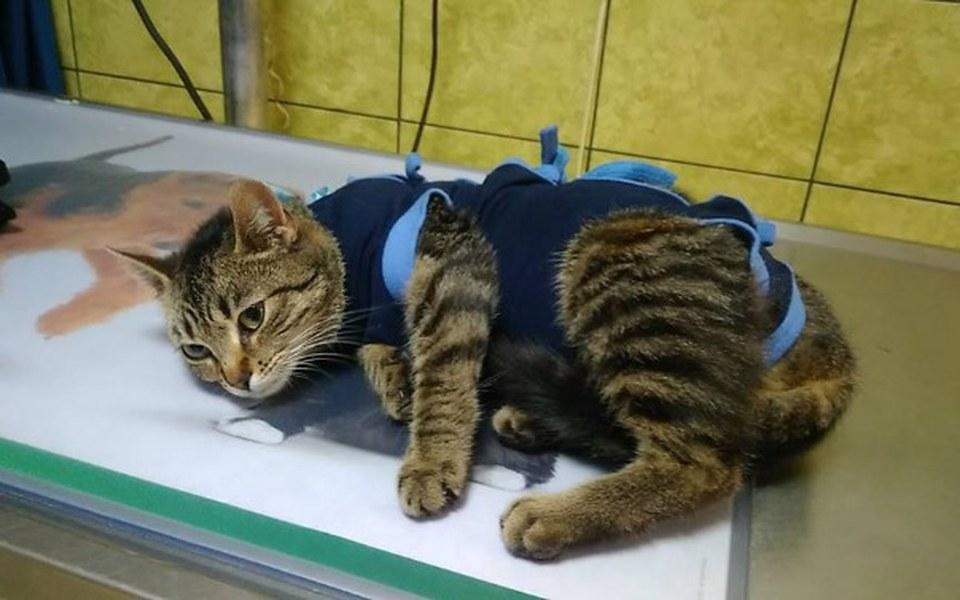 Zbiórka pomóż nam ratować koty - zdjęcie główne