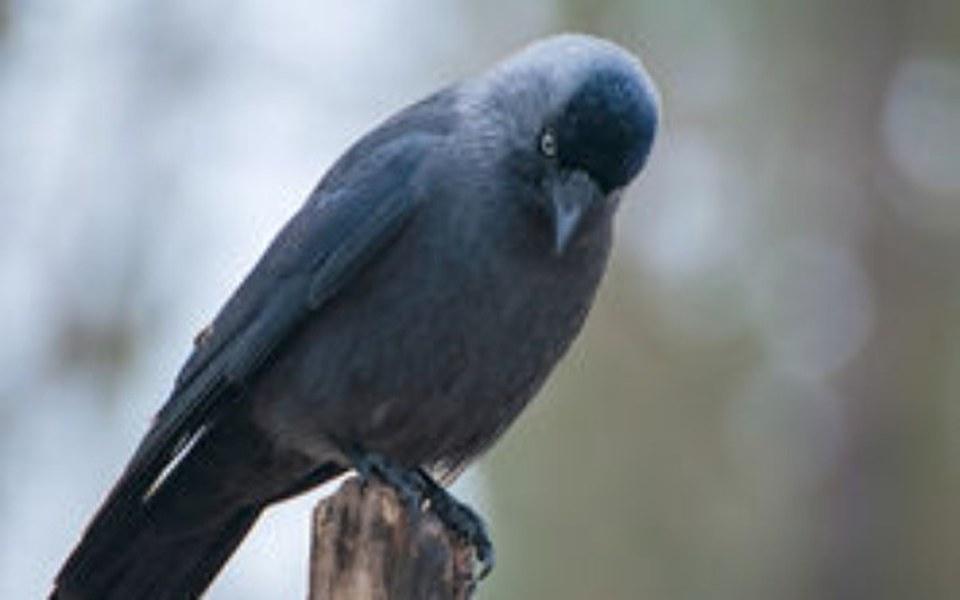 Zbiórka Pomoc chorym ptakom z Opola - zdjęcie główne