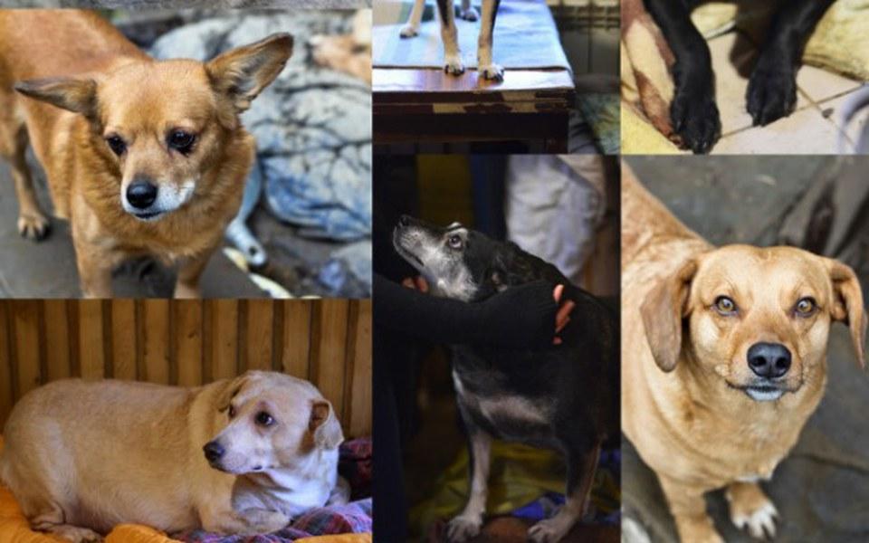 Zbiórka Prąd dla Harbutowickich psiaków - zdjęcie główne