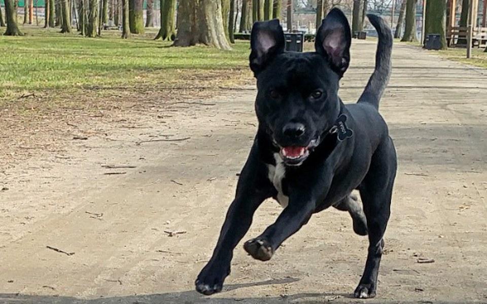 Zbiórka Rehabilitacja psa - zdjęcie główne