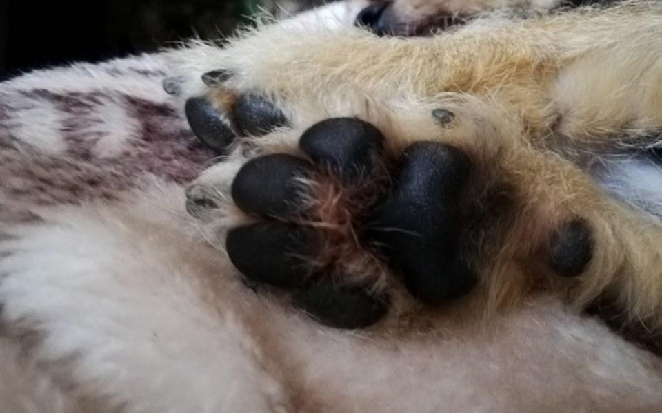 Zbiórka Tarnowski Azyl dla Zwierząt - zdjęcie główne