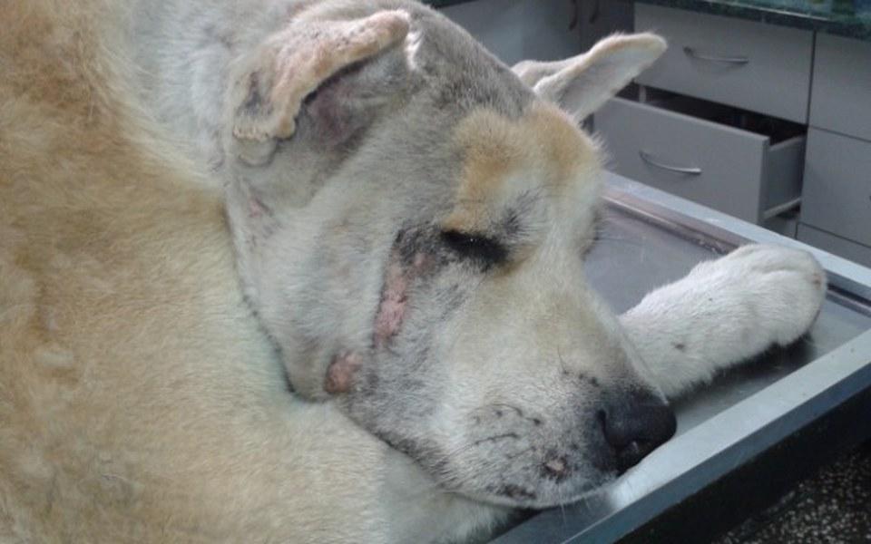 Zbiórka Życie psa wiszące na włosku - zdjęcie główne