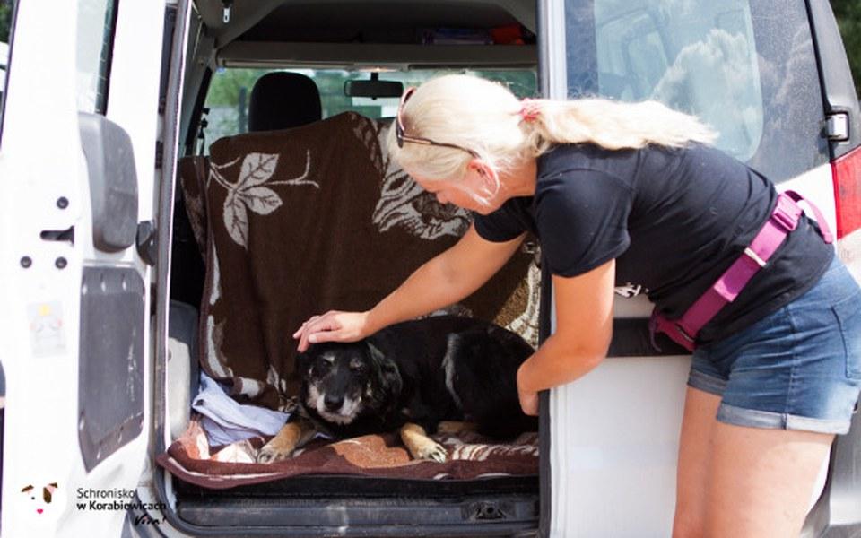 Zbiórka Ile są warte psy ze schronisk? - zdjęcie główne