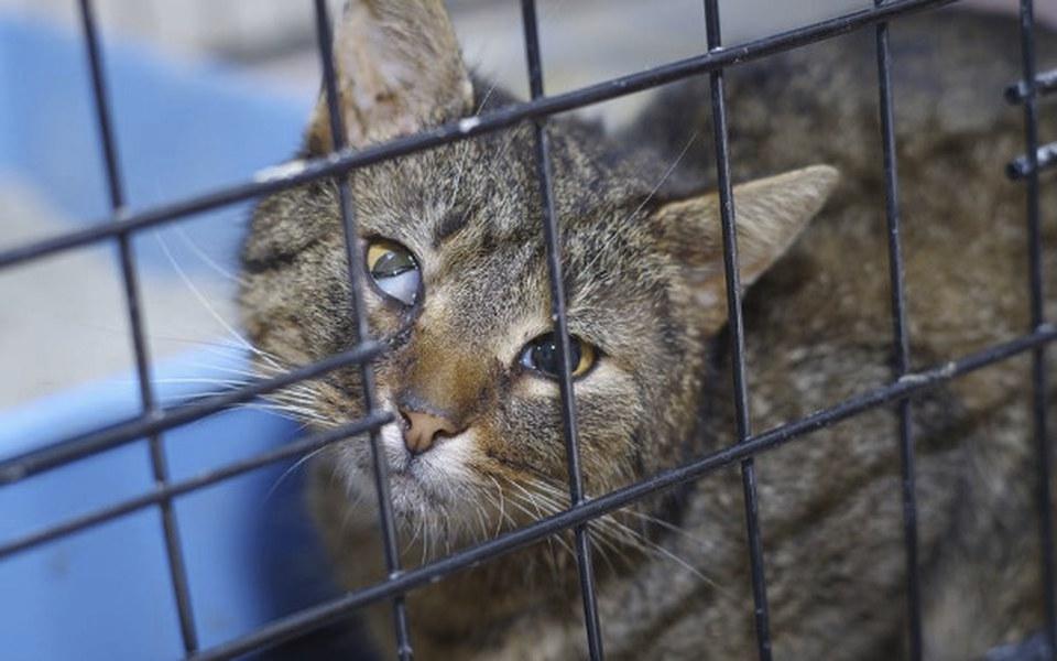 Zbiórka Zakup klatek bytowych dla kotów - zdjęcie główne