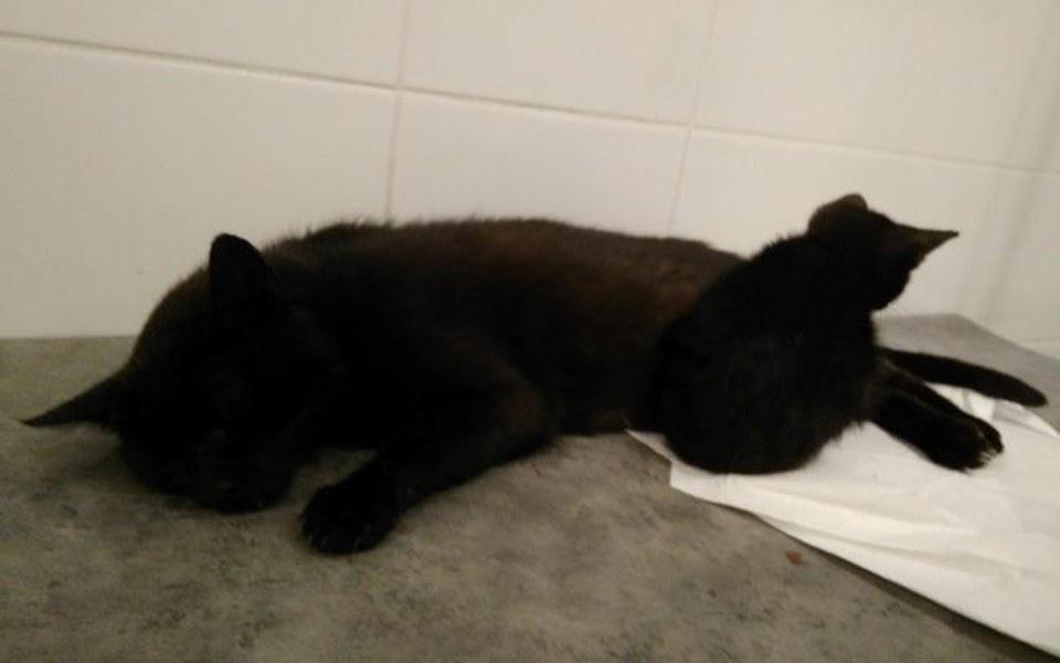Zbiórka Matka otruta, kociak bez łapki - zdjęcie główne