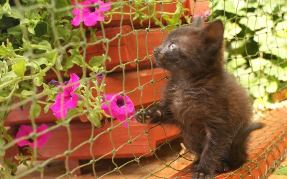 Zbiórka S.O.S. dla Zwierząt Wąbrzeźno - zdjęcie główne
