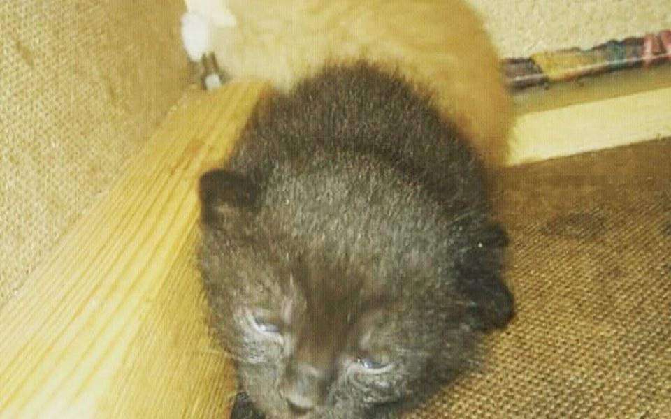 Zbiórka Karmimy kocięta - zdjęcie główne