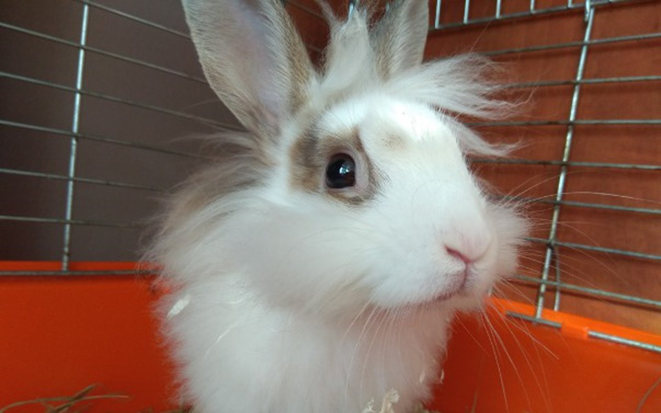 Zbiórka Ratujemy króliczka - zdjęcie główne