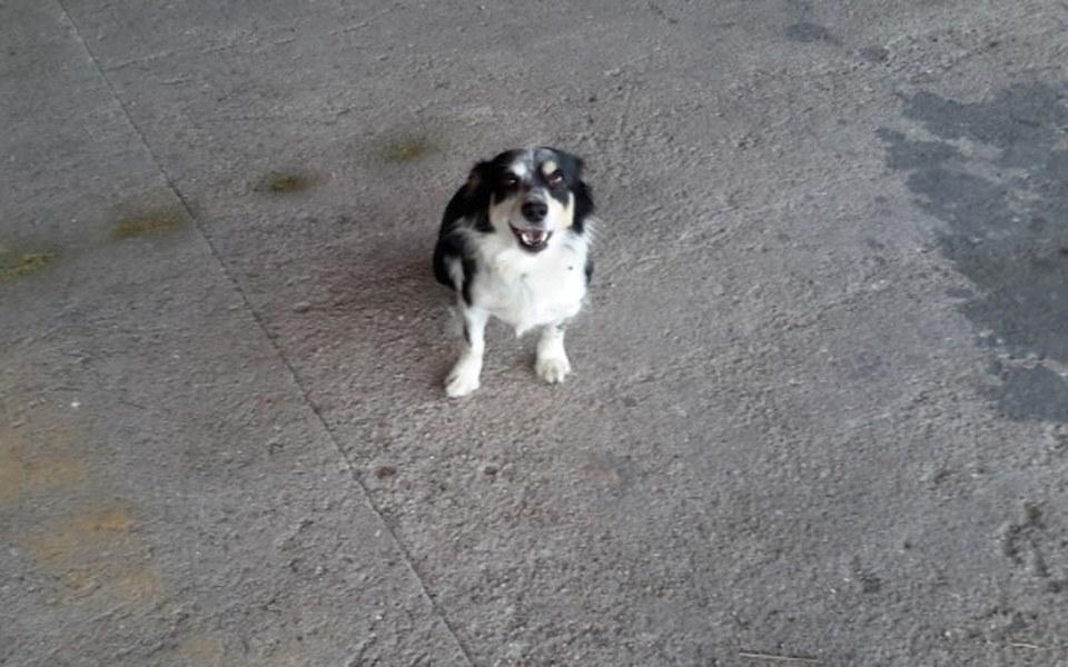 Zbiórka Leczenie psa z skręconym biodrem - zdjęcie główne