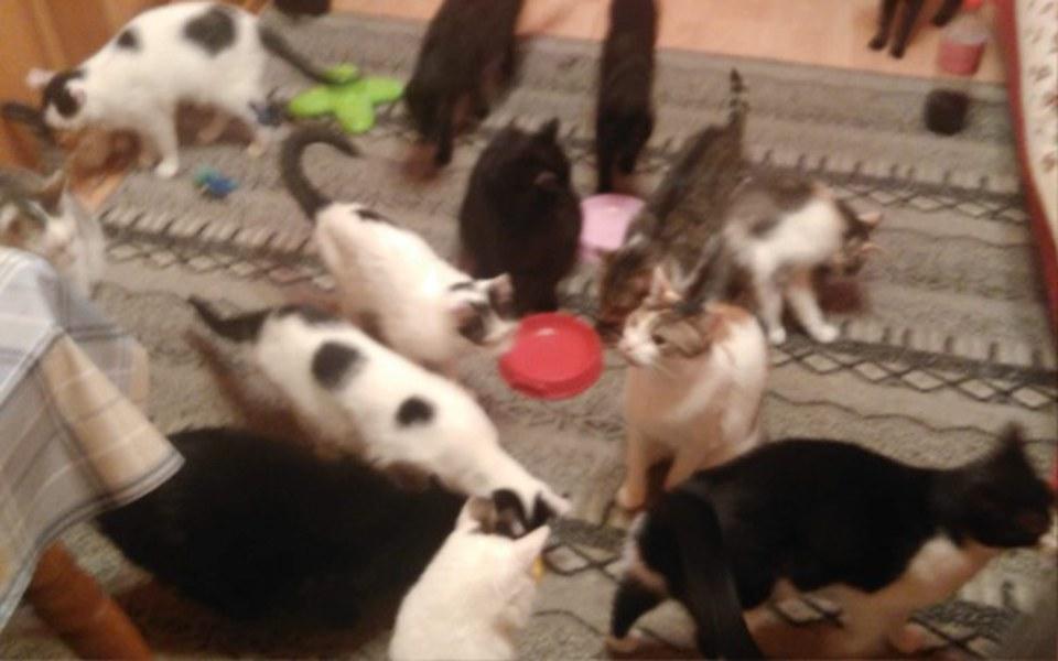 Zbiórka Chcemy dalej sterylizować koty - zdjęcie główne