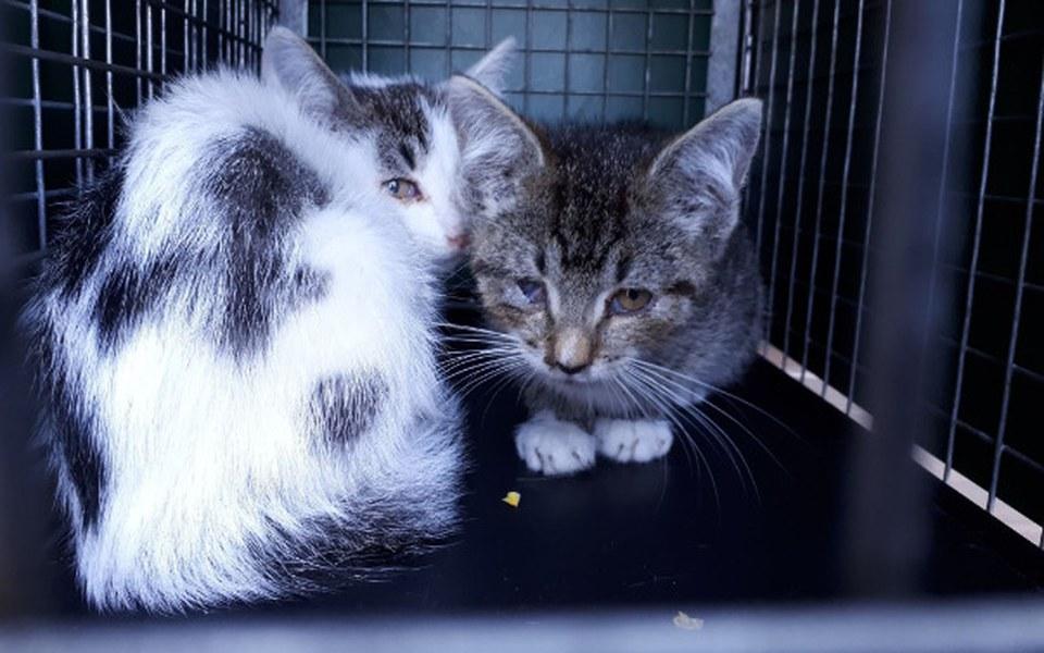 Zbiórka Koci tyfus je zabija! - zdjęcie główne