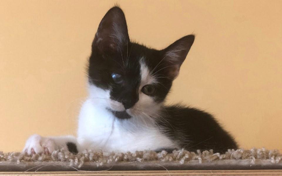 Zbiórka Jagodziankowe kocięta - zdjęcie główne