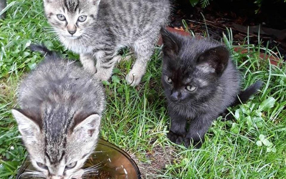 Zbiórka Na szczepienia dla 3 kociąt - zdjęcie główne