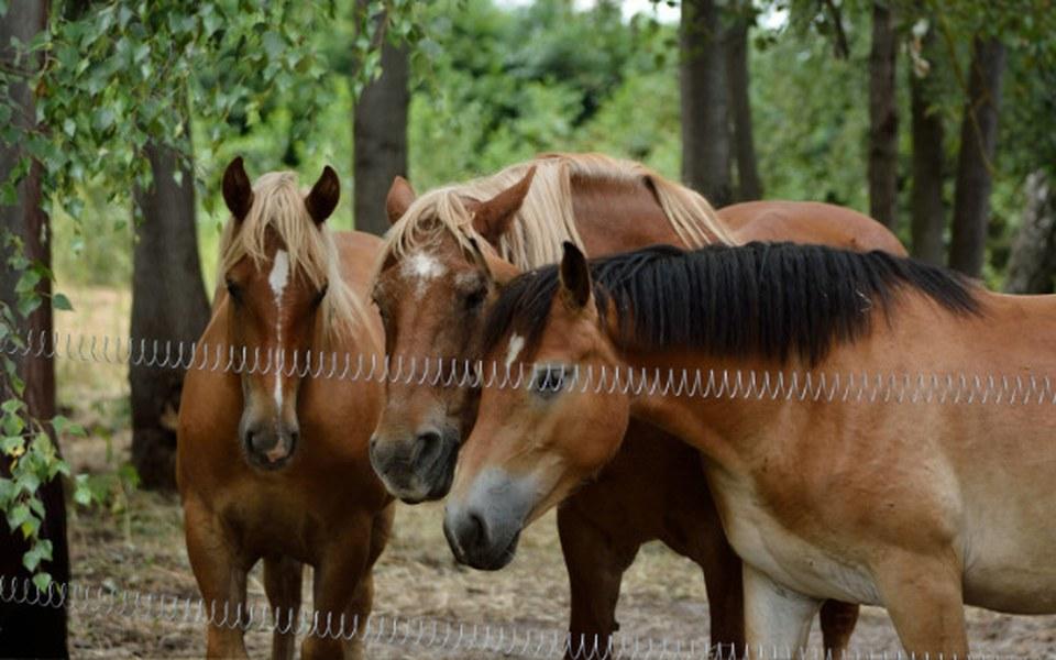 Zbiórka Boksy na zimę dla koni MS - zdjęcie główne