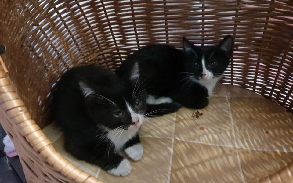 Zbiórka Dla kociaków z krzaków - zdjęcie główne