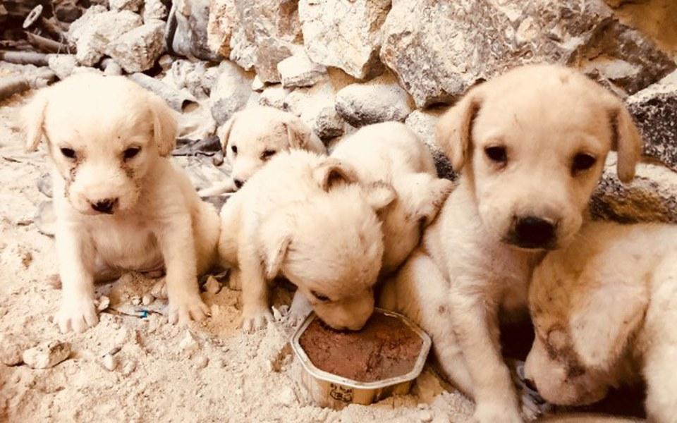 Zbiórka Psy z Santorini❣️ - zdjęcie główne