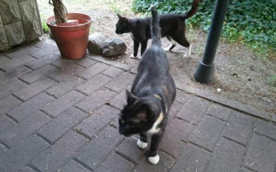 Zbiórka Kastracja kotek - zdjęcie główne