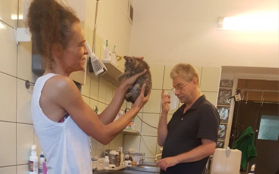 Zbiórka Na uratowane kociaki - zdjęcie główne