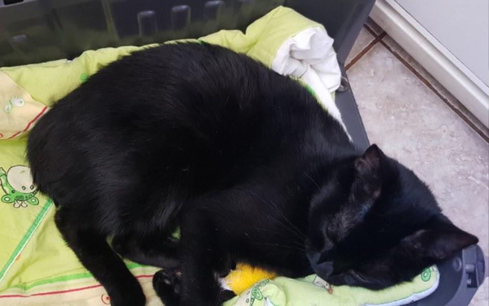 Zbiórka Operacja kręgosłupa kota - zdjęcie główne