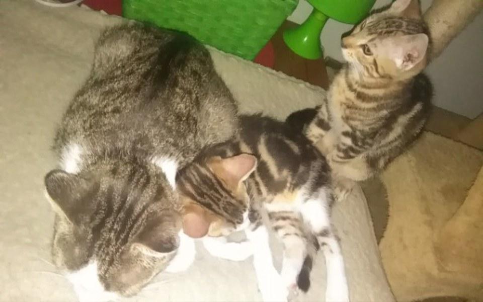 Zbiórka Dla moich kotków <3 - zdjęcie główne