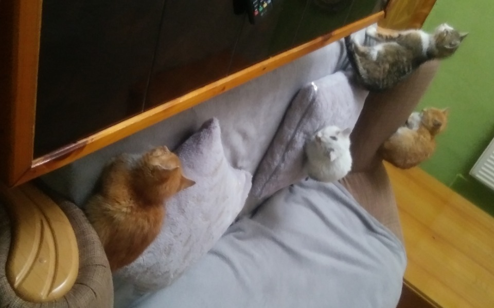 Zbiórka Podrzucone kotki - zdjęcie główne