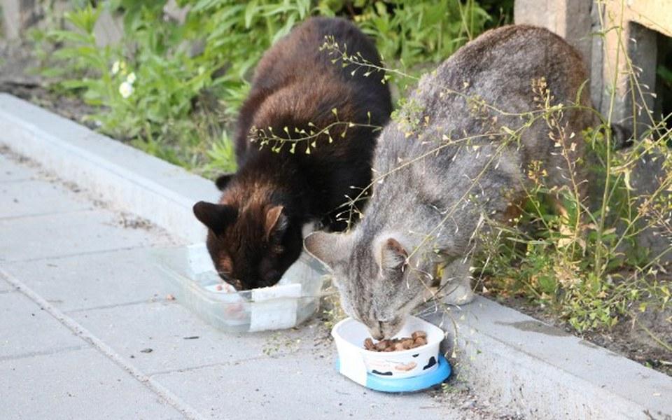 Zbiórka Niewidzialne koty - zdjęcie główne