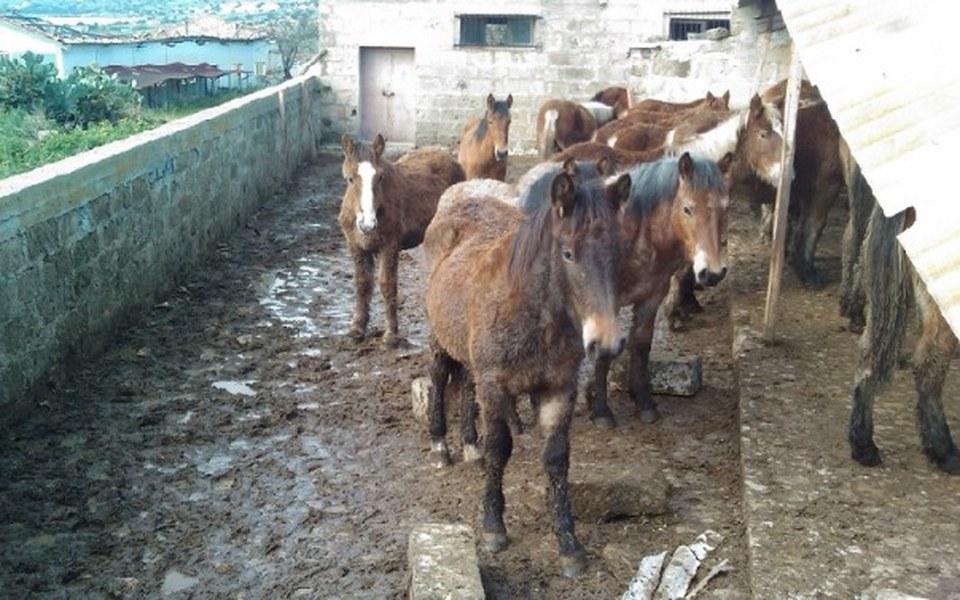Zbiórka Pomóż uratować konie na rzeź - zdjęcie główne