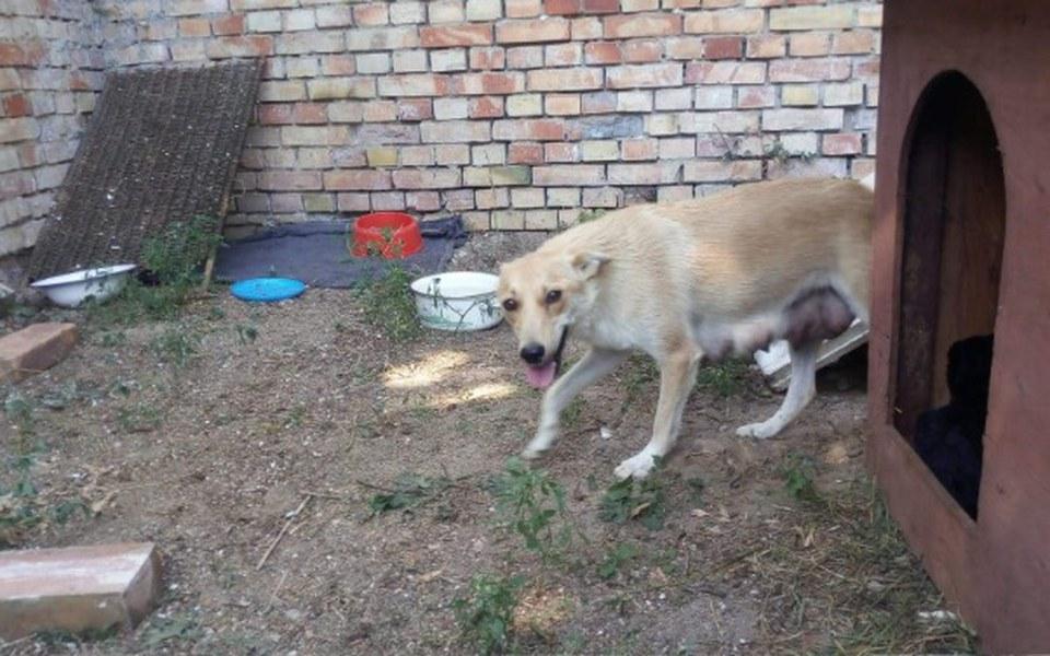Zbiórka kojec dla psów z interwencji - zdjęcie główne