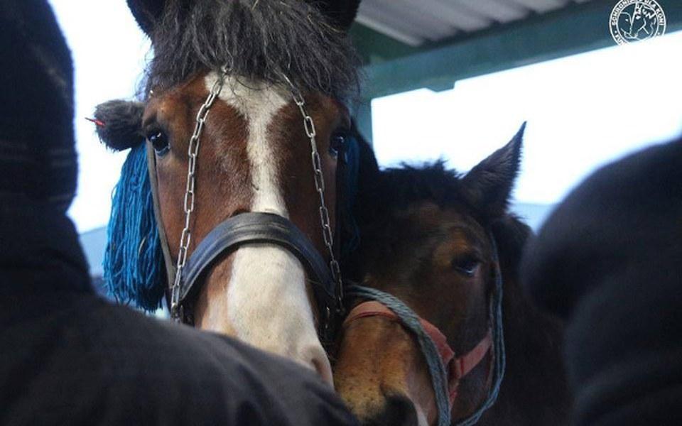 Zbiórka Ocalmy kolejne końskie życie! - zdjęcie główne