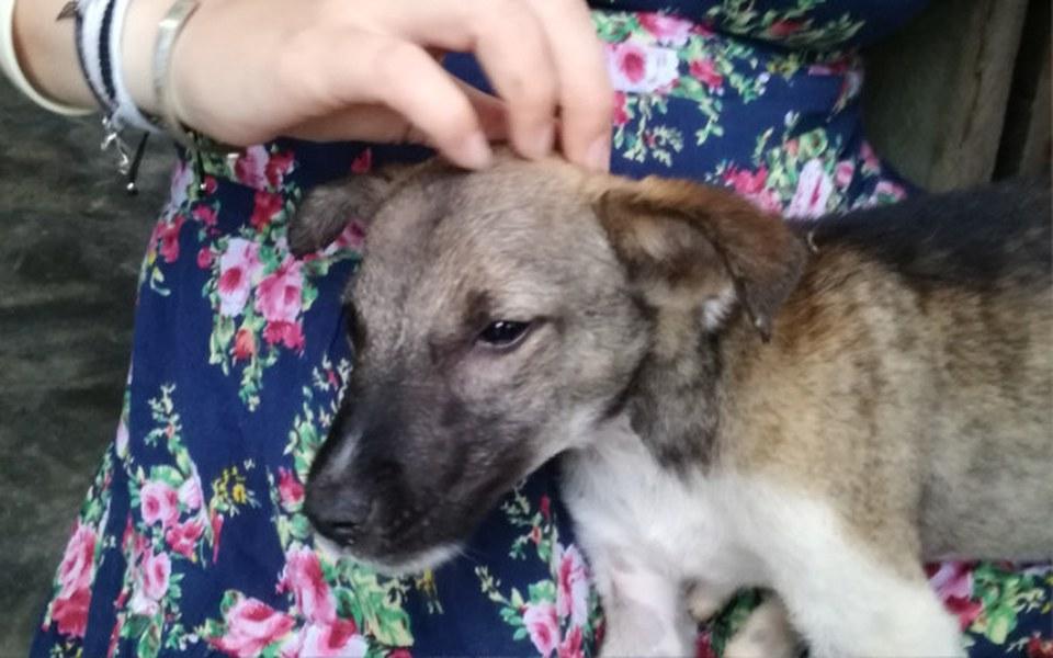 Zbiórka Chcę uratować psa z Azji - zdjęcie główne