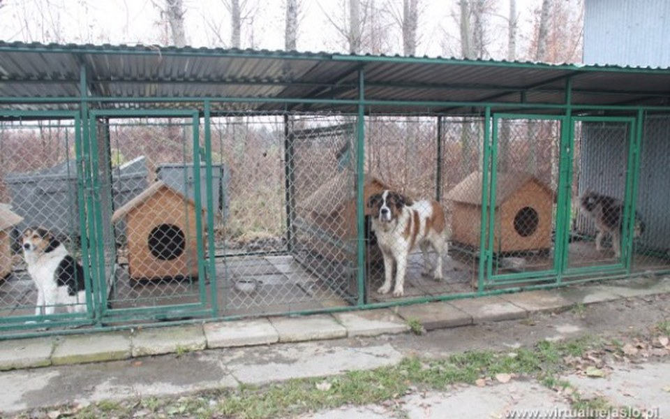 Zbiórka Pomóżmy zwierzakom z schroniska - zdjęcie główne