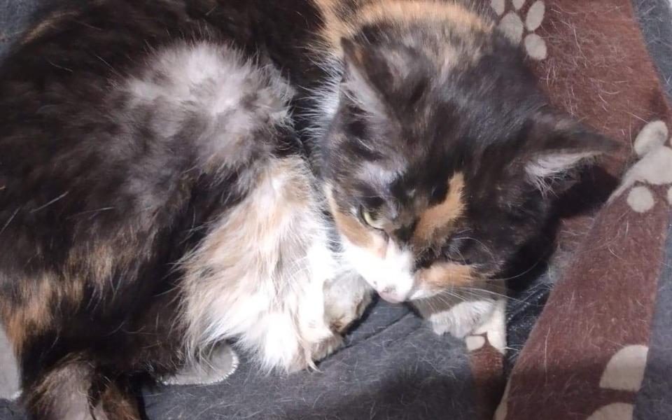 Zbiórka Wyniszczona koteczka prosi o gro - zdjęcie główne