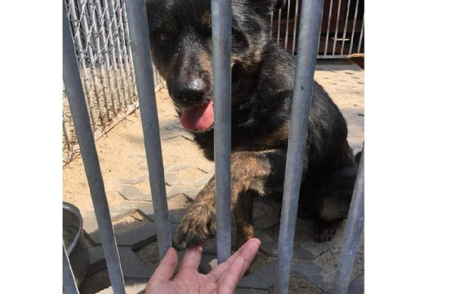 Zbiórka Karma dla zwierzaków z schronisk - zdjęcie główne