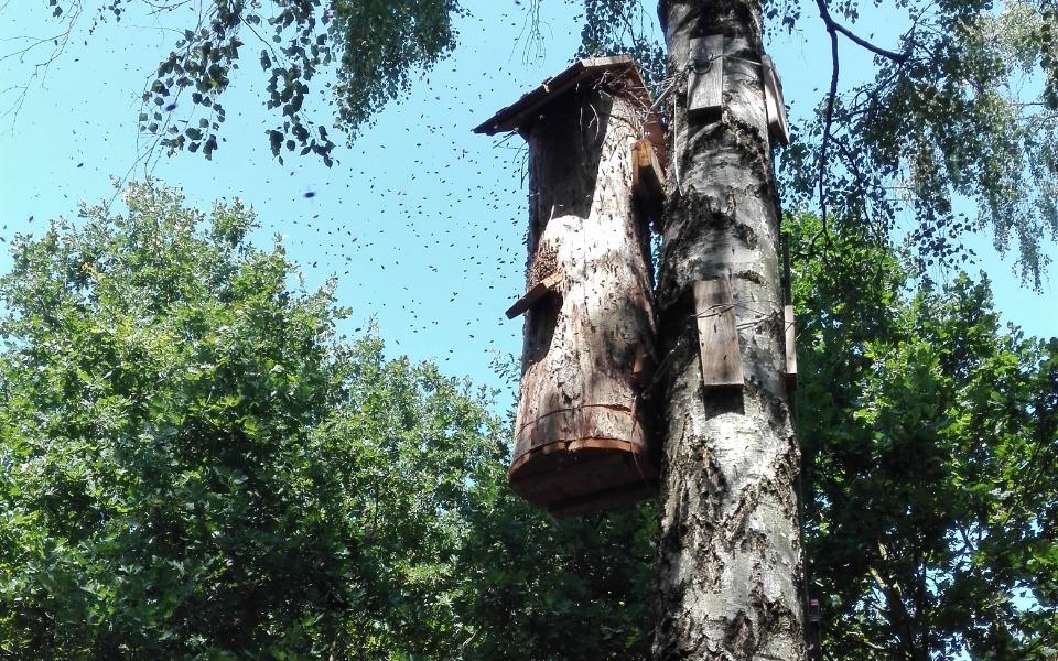 Zbiórka Pomóż Pszczołom wrócić do lasu - zdjęcie główne