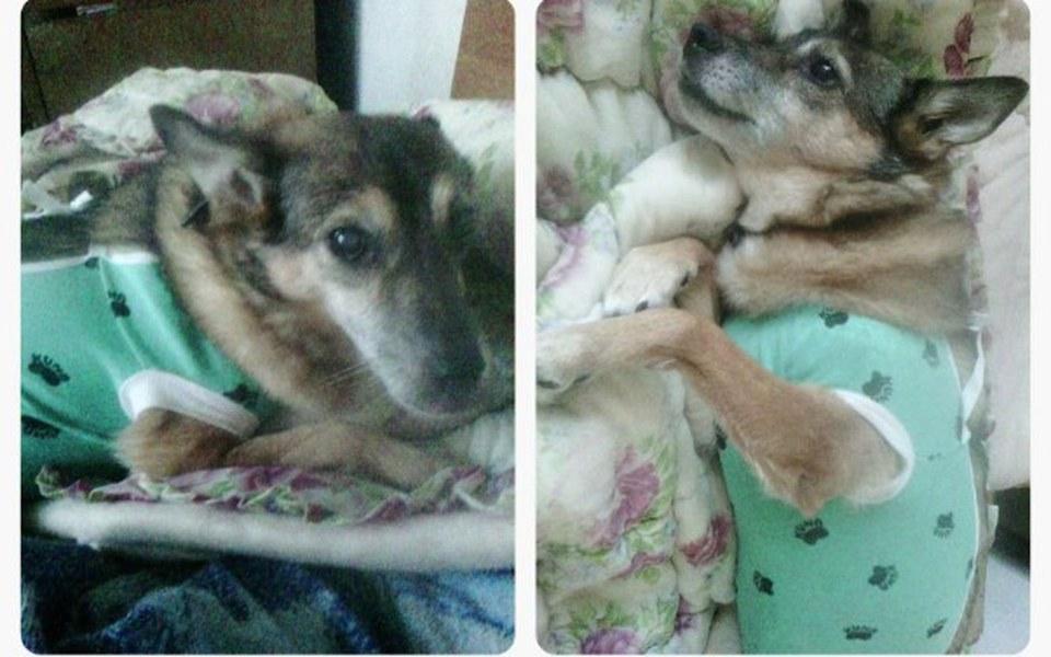 Zbiórka Pomóż nakarmić fundacyjne psy - zdjęcie główne