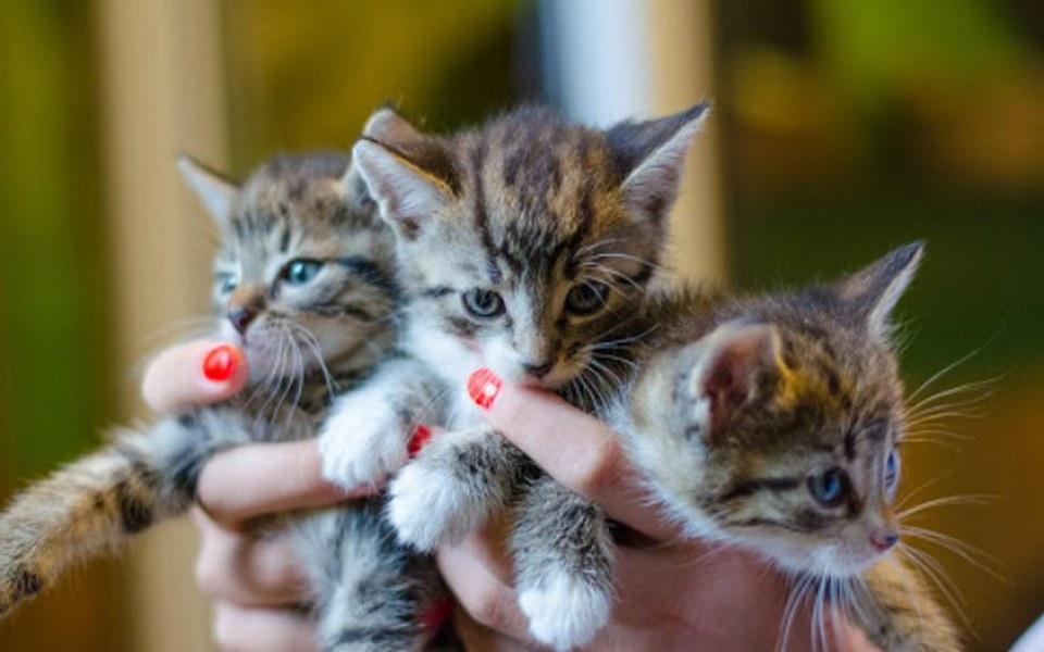Zbiórka Puszka karmy dla  kotów z Fauny - zdjęcie główne