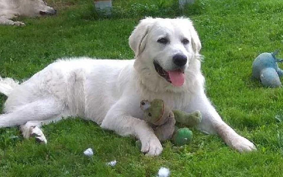 Zbiórka Ratujemy psią łapę - zdjęcie główne