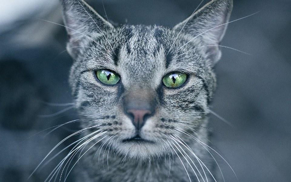 Zbiórka 280 kotów chce godnie żyć - zdjęcie główne