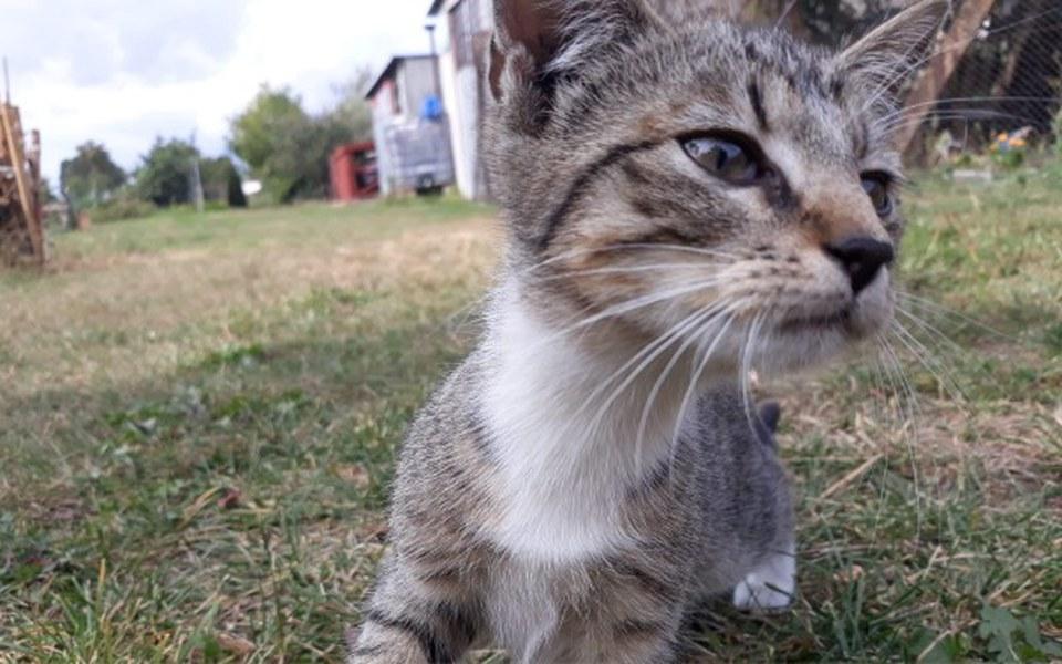 Zbiórka Daj piątaka na kociaka! - zdjęcie główne