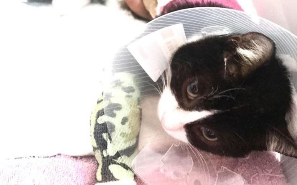 Zbiórka Costa - potrącony kociaczek - zdjęcie główne