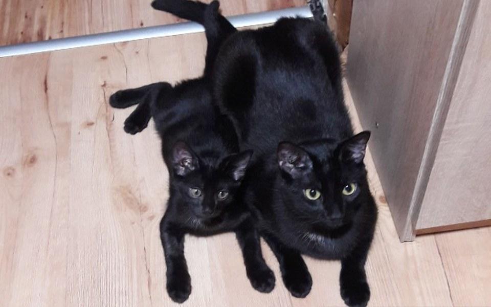 Zbiórka Uratowane kociaki. - zdjęcie główne