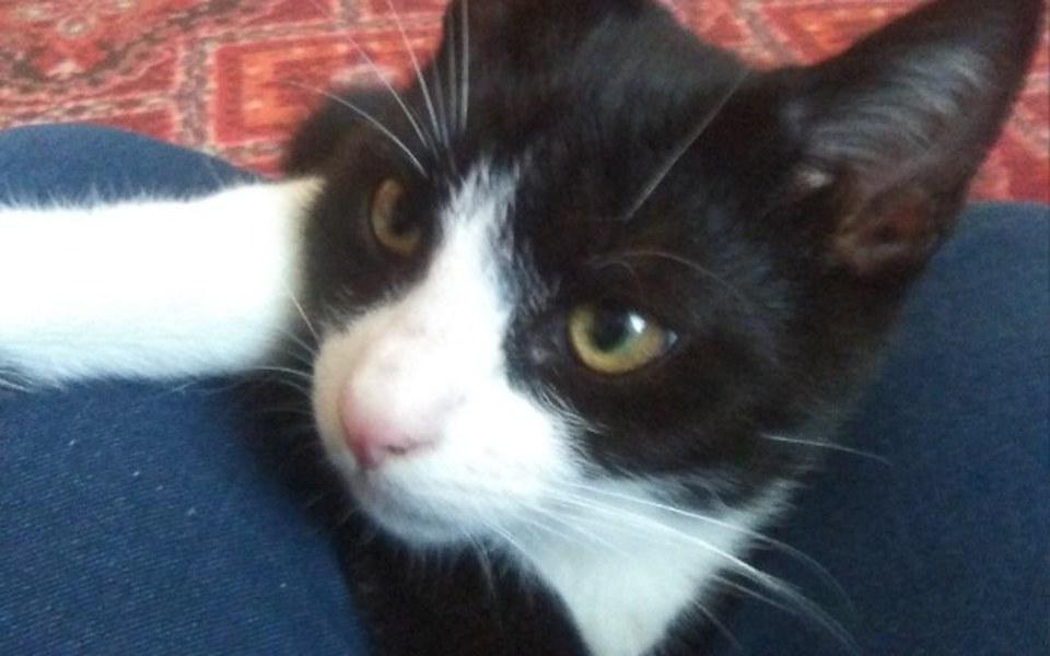 Zbiórka Zbiórka na ratowanie kotka Cziko - zdjęcie główne
