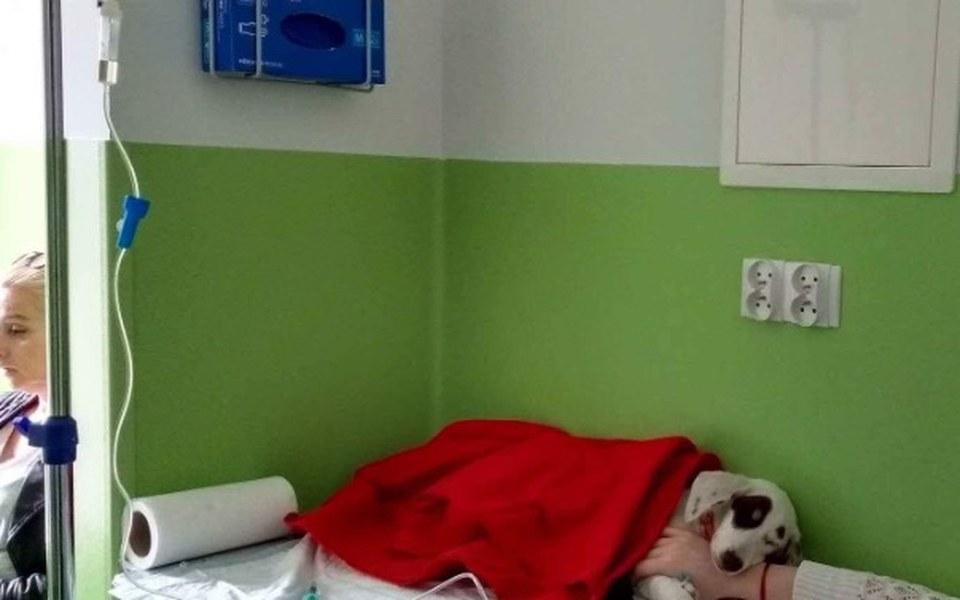 Zbiórka Parwowiroza zabija psie dziecko - zdjęcie główne