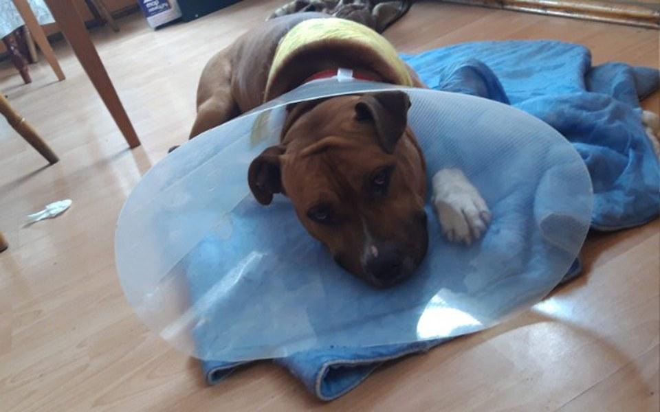 Zbiórka Pomoc na psa i leczenie - zdjęcie główne