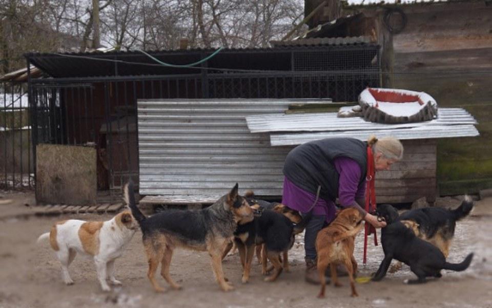 Zbiórka Na opał by zwierzaki nie marzły - zdjęcie główne