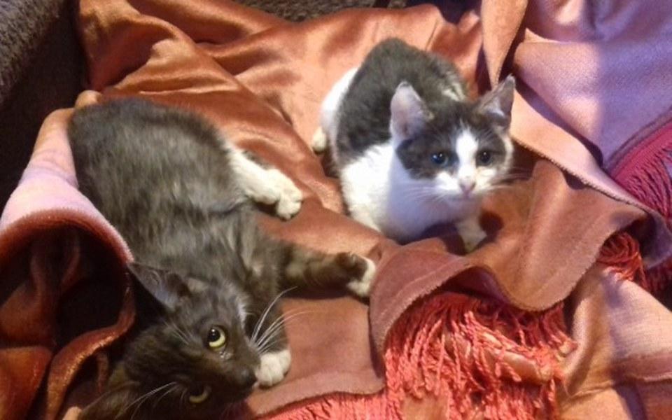Zbiórka pomoc dla kotów fundacji - zdjęcie główne