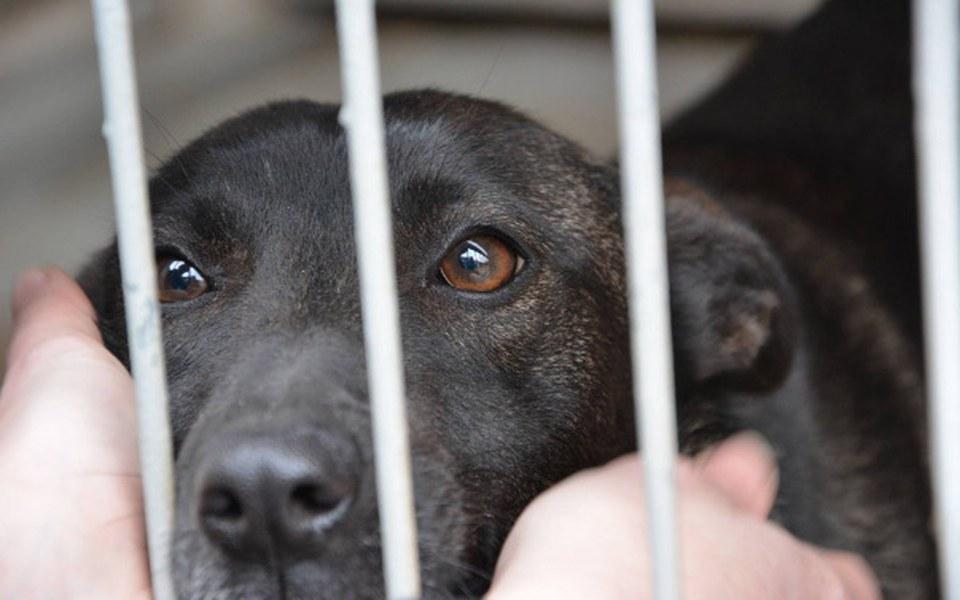 Zbiórka Uratujmy psy przed wirusami - zdjęcie główne