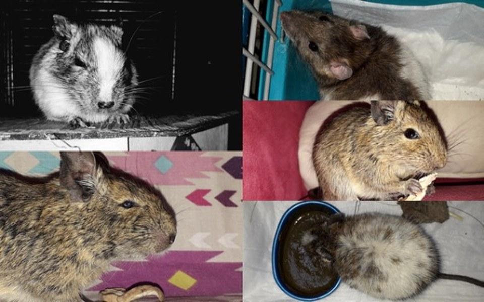 Zbiórka Koszatniczki i szczur u Kociary - zdjęcie główne